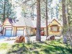 Fir,Tree,Building,Cottage,Hut