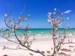 Clearwater Beach towards Honeymoon Island