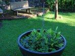 garden Javahouse