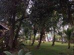 Coconut Garden View