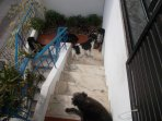 The stray dogs having  sunbath on the stairs to access the house.