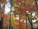 Fall colors are glorious in the forested Hocking Hills