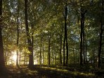 Sunrise in the Forest of Dean