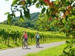 Radfahren in der Pfalz