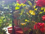 sit amongst the roses on the outdoor couches