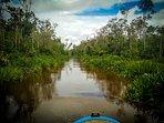 Sekonyer River in Tanjung Puting national Park: home of 6000 orangutans
