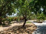Our private small forest with many kind of fruit trees