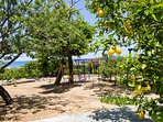 Our private small forest with many kind of fruit trees and playground