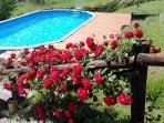 Trifoglio house - the pool