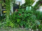 Jardin privatif.
