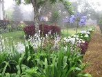 Garden with fog mist in front of cottage in the spring time