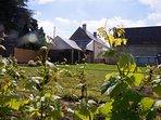 jardin, vigne, piscine