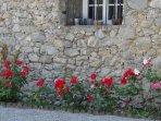 nos jolies roses