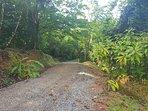 Interior road on Finca Khan