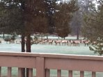 View the elk grazing from the deck.