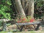 Bench beneath the Tulip Tree (yellow poplar).
