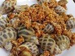 Sea snails BBQ - 40m away