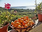 Enjoy local oranges from our fields between December and March.