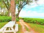 Picnic a tavolini golfo vista sulla spiaggia ombreggiata da pini australiani
