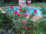 Garden & Swimming pool