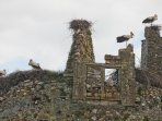 Storks nesting on a ruined castle