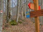 Sentieri all'Orecchiella, Parco Nazionale dell'Appennino Tosco Emiliano (12 Km dall'Agriturismo).