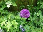 Summer flowers in our beautiful garden