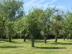 With a one acre organic orchard right outside your door...
