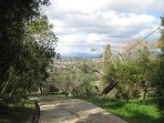 The private driveway through our olive grove.