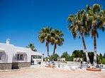 Palm trees around the villa