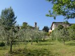 Olive grove looking up towards the house and nearby church