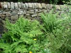 Our gorgeous dry stone wall in the garden.