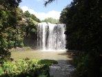 whangarei falls a 15 min drive away