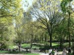 Central Park in summer time