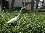 Beautiful white heron in garden outside Bldg 5