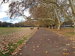 The London Plane trees that surround Victoria Park are always changing to reflect the season.