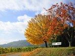 Erfreuen Sie sich an den Herbstfarben in der Pflaz: Die beste Zeit zum Wandern und Weinverkosten!