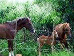 there are plenty of horses around