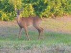 Wildlife seen from Ocean Bluff  lanai