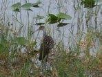 Wildlife at Lake Marion Lake