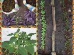 Growing our garden....