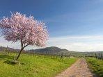 Genießen Sie im Frühling die Sonne und die Mandelblüte in der Pfalz!