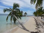 Your beach on the Sea of Abaco with the most beautiful palms and white sand. Lawn chairs waiting!