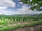 Look out onto the neighboring Christmas tree farm from the deck!