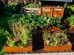 Nature is Everywhere, Organic Garden and Composting Area Guest Use