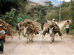 Enjoy the color of the local country life, Vilcabamba Ecuador