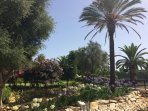 JdMP gardens