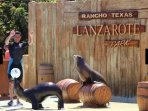Ranch Texas is a great day out for everyone .Has also evening entainment 10 minute walk away.