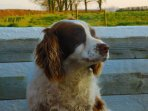 Lucy the farm dog will always welcome you with great friendship to carrigmorefarm