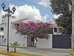 Exterior of the property on Ave. 10 between Xel Ha (Calle 15) and Calle 17